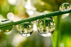 "Dew…    實在是美的令人懷疑其真實性   這種現象叫做""神聖的幾何 natural geometry""   神聖幾何在大自然中亦比比皆是,如美麗細密,狀若輻射散開的蜘蛛網,  螺殼花紋、蜂巢、花辮、雪花、水的結晶等。細心觀察,神聖幾可無處不在。    13"