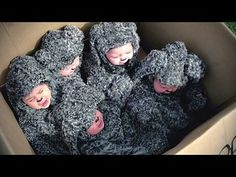 Wilfred - Season 4: Puppies Trailer --  -- http://www.tvweb.com/shows/wilfred-2011/season-4--puppies-trailer