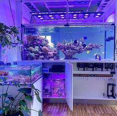 Saltwater Aquarium Setup, Turtle Aquarium, Coral Reef Aquarium, Saltwater Fish Tanks, Aquarium Stand, Tropical Fish Tanks, Aquarium Design, Marine Aquarium, Marine Fish Tanks