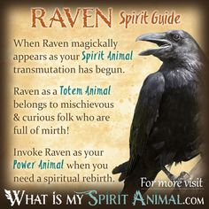 Raven Symbolism & Meaning