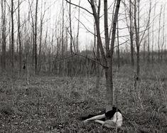 stillness by helena kvarnstrom.[from design squish]