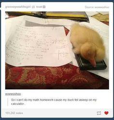 I can't do my homework. My duck fell asleep on my calculator.