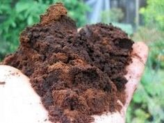 Reuse those coffee grounds from your cup of joe in your garden - sprinkle directly on top of the soil or put in compost bin. Adds nitrogen, phosphorus and potassium as well as micronutrients. Best Iced Coffee, Great Coffee, Coffee Tasting, Coffee Drinks, Drinking Coffee, Coffee Art, Coffee Club, Coffee Mugs, Starbucks