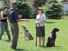 Valuable Training Your Dog Tips That Really Work