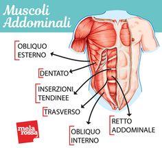 Vacuum addominale per attivare il muscolo trasverso e avere una pancia piatta. I consigli del coach per eseguirlo in un modo corretto