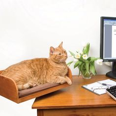 Cat nesting box keeps your pet close and comfy while you work.