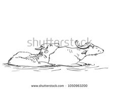 Vector sketch of two water buffalos laying in mud, Hand drawn linear illustration Animal Drawings, Pencil Drawings, Cow Illustration, Cheese Brands, Figure Sketching, Water Buffalo, Art Sketches, Mud, Hand Drawn