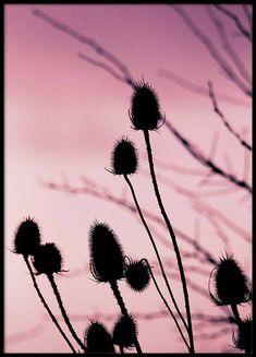 Plants close up at sunset Affiche dans le groupe Affiches / Formats / 50x70cm chez Desenio AB (2968)