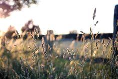 Summer grasses nature journaling workshop