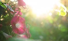 """Слънчево и позитивно да е началото на новата седмица за всички!  www.news.inbalance.bg """"Голямото щастие идва като дар от небето,а малките радости – от хората."""" Китайска пословица"""