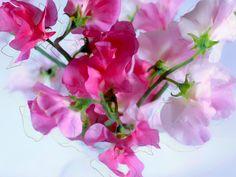 熊谷正の『美・日本写真』(2014/11/18更新)写真④「ミクストメディアの花」 写真/金城真喜子