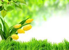 Spring freshness (5009x3687)  via www.allwallpaper.in