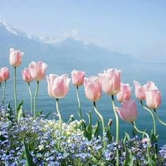 🌷 these beauties are for you @kathydanmala