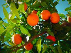 Appelsiini orange Orange, Fruit, Vegetables, Nature, Food, Naturaleza, Essen, Vegetable Recipes, Meals