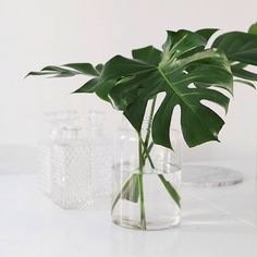 How incredible are these bold philodendron? Found over at @trendenser these deep green waxy wonders make a big statement with minimal effort