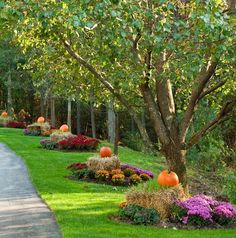 #Autumn #landscaping tips trees