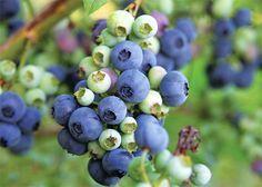 Natural Garden, Planting Flowers, Berries, Gardening, Nature, Plants, Lawn, Naturaleza, Lawn And Garden