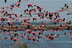 Lo spettacolo dei fenicotteri rosa.  www.slowsports.it