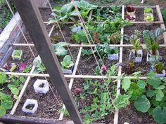 A square foot garden.