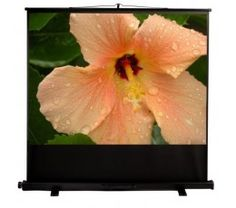 Mustang Portable Pull-Up Projection Screen, Matte White Hibiscus Tree, Hibiscus Flowers, Portable Projector Screen, Projection Screen, Blooming Flowers, Flowering Trees, Rain Drops, Peach Colors, Flower Beds