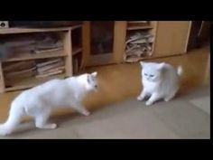 Dog Save Fight Between Two Cats Amazing Vedio