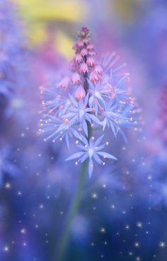 ~~fairy dust | Tiarella, foam flower | by Monique Felber~~