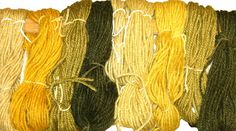 Looming Thoughts: Plant Dyes - Tansy and Queen Anne's Lace