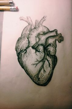 Top Anatomical Tattoos For Men and Women Heart Anatomy, Anatomy Art, Anatomy Tattoo, Herz Tattoo, 1 Tattoo, Future Tattoos, Tattoos For Guys, Anatomical Tattoos, Anatomical Heart Drawing