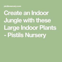 Create an Indoor Jungle with these Large Indoor Plants - Pistils Nursery