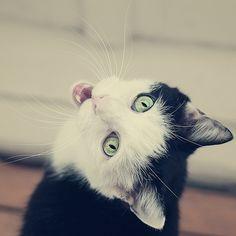 Meowww!!