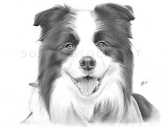 The gorgeous @dasherbordercollie! He has been an absolute pleasure to sketch and I can't wait for his portrait to arrive safely in it's new home. Hope you like it! Video coming sooooon!  . . . . . . #artfeaturehelp#art_4share#artistrepost#rtistic_feature#artfeaturehelp#artsupporting#arts_secret#love_art_help#creative_animalart#animal_artists#animalartistry#animalartshare#artistic_share#art_conquest#art_feature#sharemoreart#artist_support#worlofarti