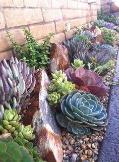 Desert Landscaping Backyard, Succulent Landscaping, Landscaping Plants, Landscaping Ideas, Inexpensive Landscaping, Backyard Pools, Succulent Rock Garden, Small Front Yard Landscaping, Succulent Ideas