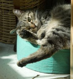 From the Archives: That Silly Tabby Cat