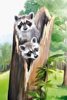 raccoons for mural