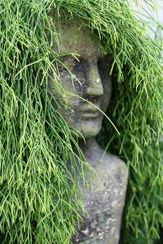"""Garden bust made of cement with Dancingbones cactus(Rhipsalis salicornioides) for its """"hair""""Gorgeous!"""