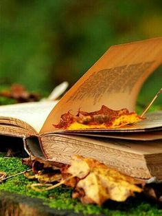 Books  & Fall  = yes & yes