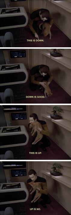 Data Trains His Cat #Geek