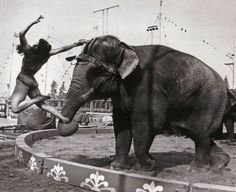 SAVE2905 | William Woodcock | Flickr Old Circus, Circus Show, Circus Theme, Vintage Circus, Night Circus, Elephant World, Circus Pictures, Water For Elephants, Human Oddities