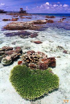 beingindonesian:    Pulau Derawan, Berau, Kalimantan Timur, Indonesia.  Inspired by zachypoo and ratuaghnia. :)