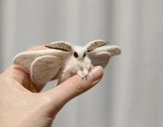 This is a Venezuelan Poodle Moth, these weren't even discovered until 2009.