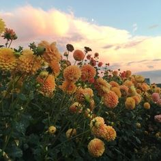 Hillside of dreams nature aesthetic, flower aesthetic, flowers nature, love flowers, beautiful My Flower, Wild Flowers, Beautiful Flowers, Flowers Nature, Fresh Flowers, Mother Earth, Mother Nature, Plants Are Friends, No Rain