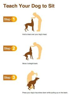 Teach your dog to sit: