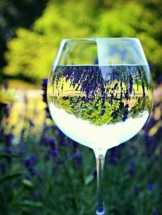 Beautiful white wine reflection...need to try this next time i find myself in a garden with a glass of wine... View through ...