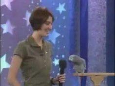 Talking Bird Funny