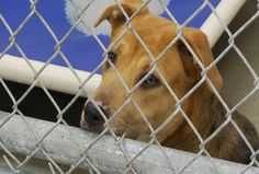 Grand Traverse Commissioners Move Animal Control Services to She - Northern Michigan's News Leader