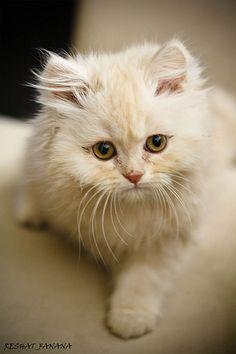 .\kitten