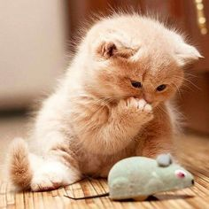 66 Pics of Kittens and Cats - Cutest Baby Animals Cute Baby Cats, Cute Cat Gif, Cute Funny Animals, Cute Baby Animals, Funny Cats, Jungle Animals, Kittens And Puppies, Cute Cats And Kittens, Kittens Cutest