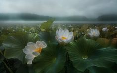 The morning rain by Shanyewuyu