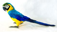 Made to Order Needle Felted Large Parrot: Custom needle felted