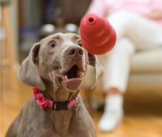 When the weather turns cold, it's easy to slack on your dog's regular exercise routine. Trainer Mikkel Becker shares five simple ways to keep your dog active when the winter weather keeps you indoors.